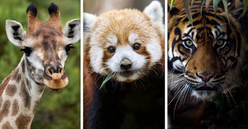 Un millón de especies están amenazadas por la acción humana