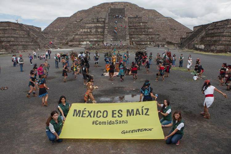 México es Maíz