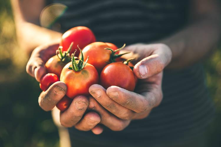 Una mujer con tomates recién cultivados en la mano
