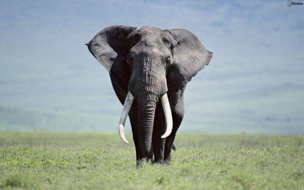 elefante-179087