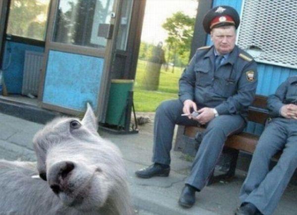 animal-photobombs-24