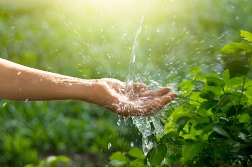 Semana del Ambiente: soluciones verdes para cambiar el mundo