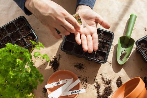 ¿Cómo replantar restos de vegetales en tu propia cocina?