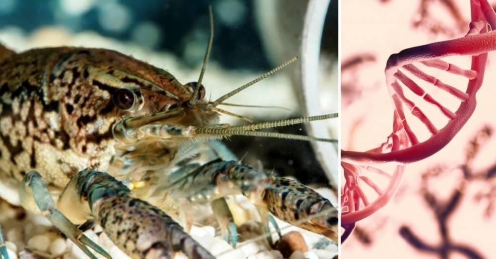Esta especie de cangrejos lleva 30 años clonándose a sí misma desde una sol..