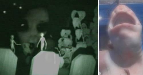 ¿Un humanoide? Revelan qué es este extraño ser encontrado en México