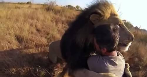 La impactante amistad entre un hombre y una pareja de leones