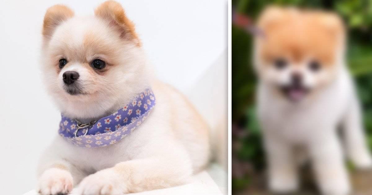 Éste era el perrito más lindo del mundo