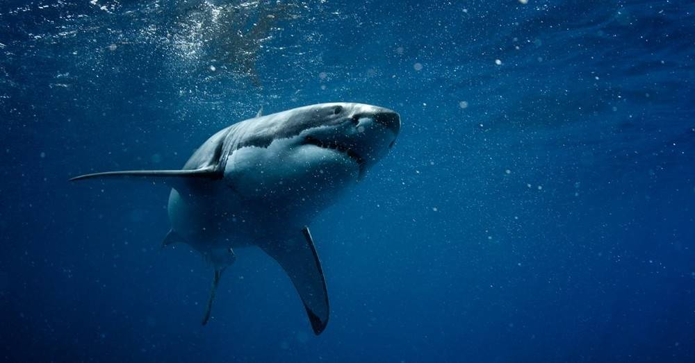 10 cosas que no sabías sobre los tiburones