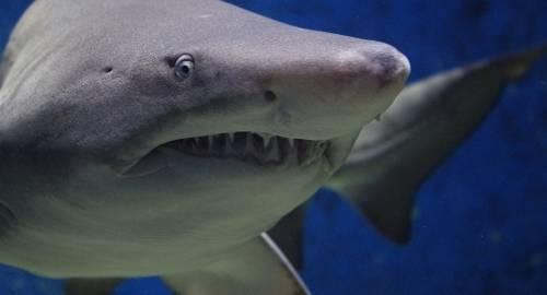 No es broma: el video de unos hombres riéndose de un tiburón indigna al mundo