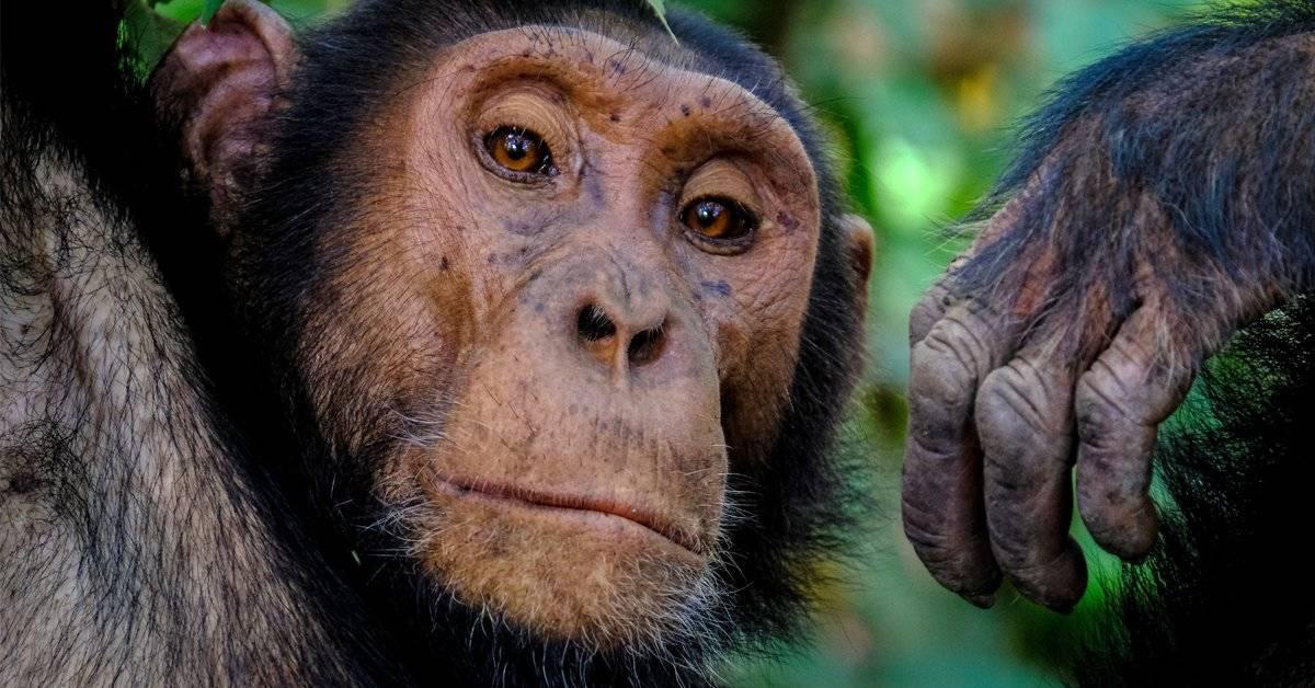 La terrible historia de Monkey Island, la cruel isla que nunca debió existir