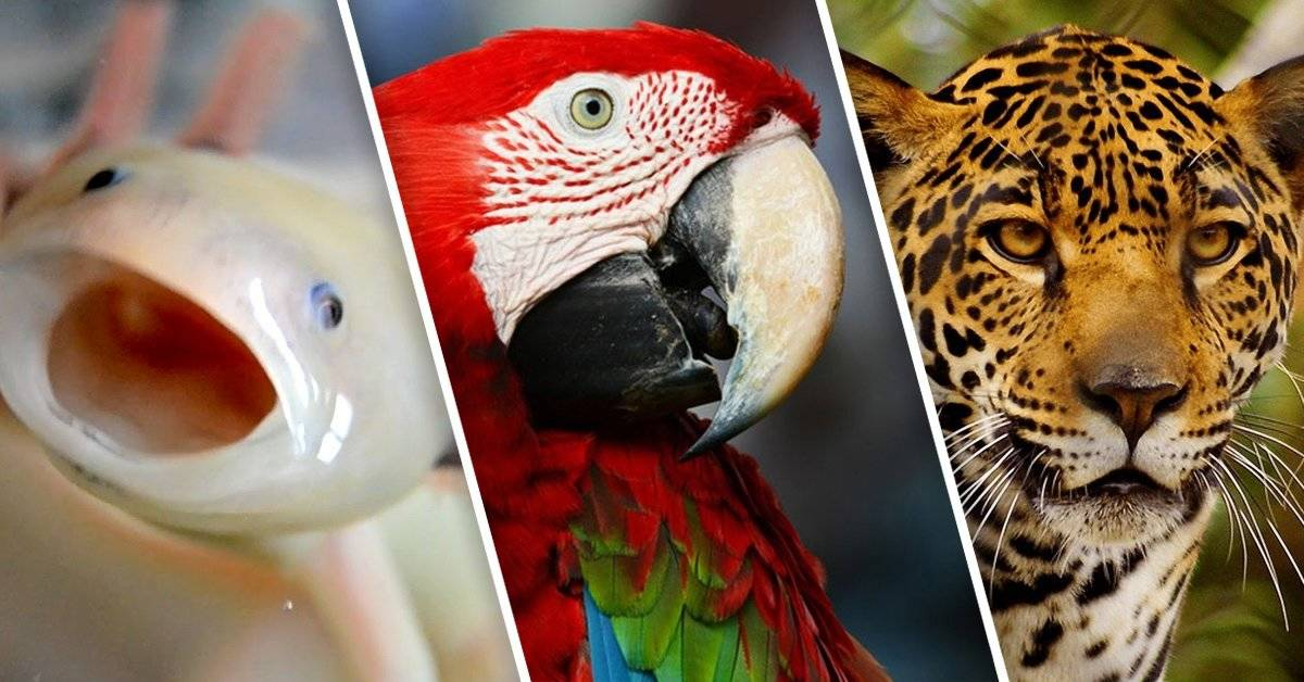 5 especies mexicanas en peligro de extinción
