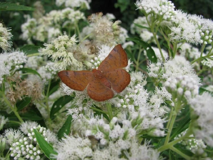 Mariposas en el Jardín Botánico de la Ciudad