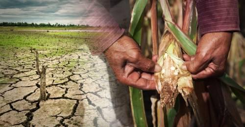 Centroamérica pide ayuda internacional por efectos de la sequía en la región
