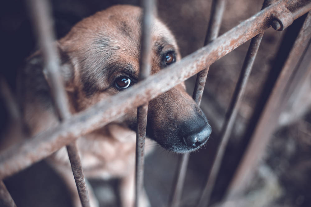 Australia castigará a maltratadores de animales con hasta 2 años en prisión