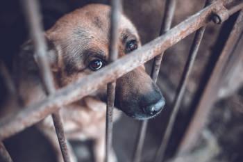 crueldad animal perro