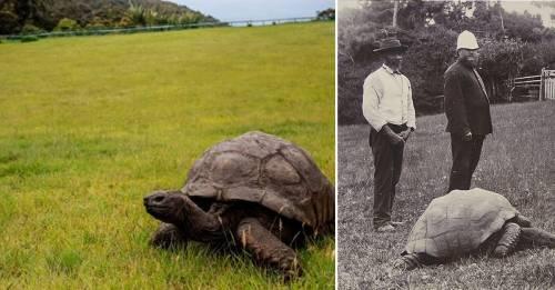 Descubrieron por qué la tortuga más vieja jamás tuvo hijos y todos están s..
