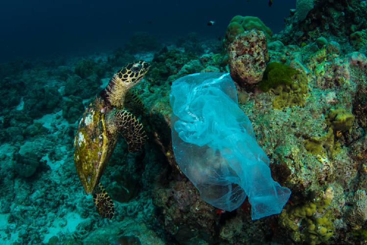 tortuga bolsas plasticas