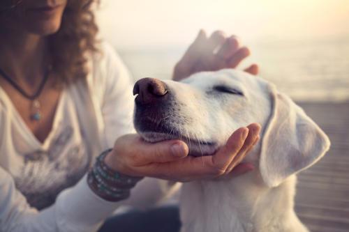 Descubre los beneficios que trae acariciar a una mascota