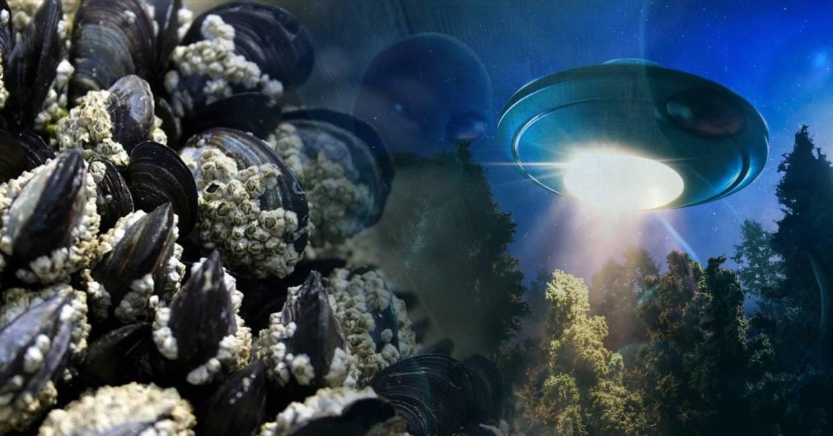 ¿Los mejillones son extraterrestres? Esto es lo que dicen los científicos