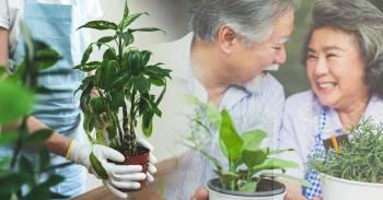 Cómo puedo revivir una planta con 1 solo ingrediente