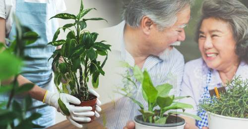 Solo necesitas un ingrediente para revivir tus plantas
