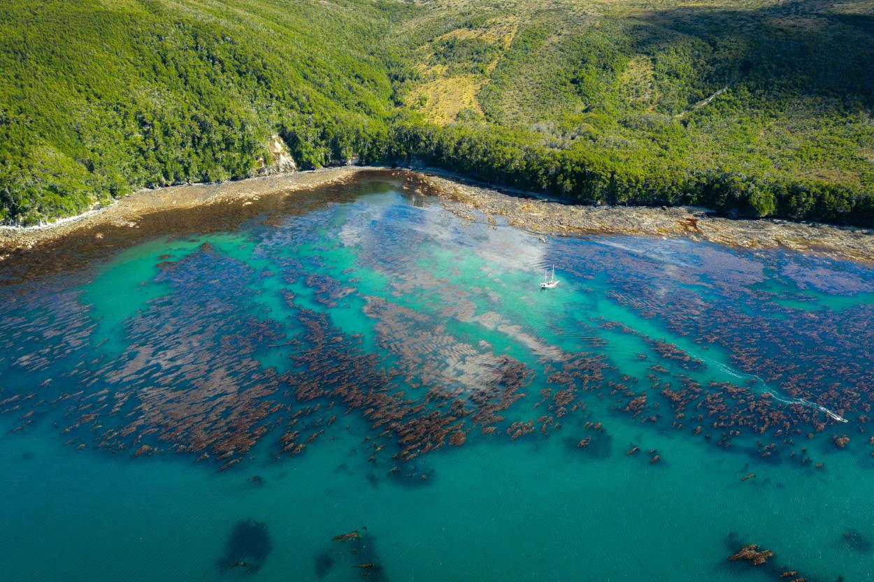 ¿Cuál es el rol que cumple la Argentina para salvar a los océanos?