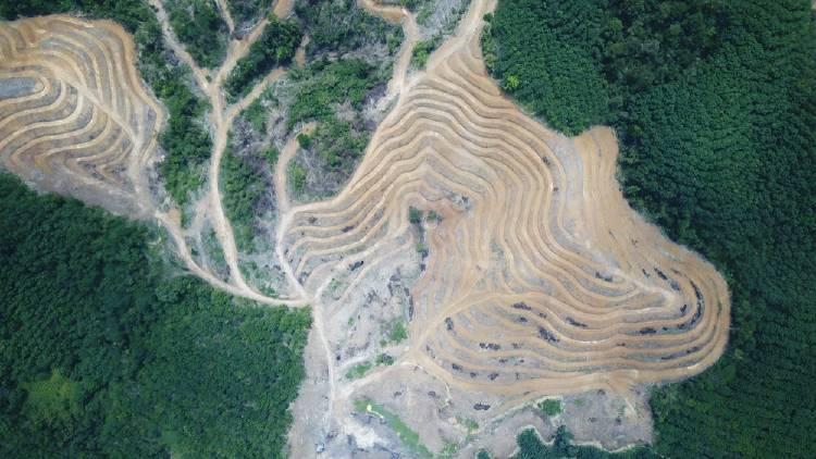 deforestacion_(1).jpg