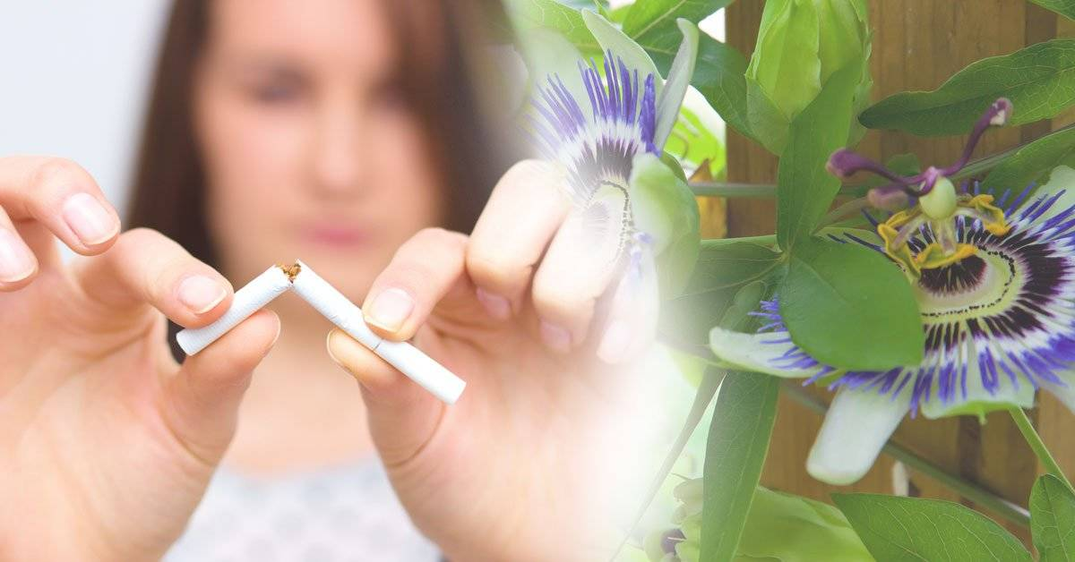 Termina con el insomnio y elimina las ganas de fumar con esta pequeña flor