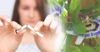 Elimina el insomnio y las ganas de fumar con flor de pasionaria