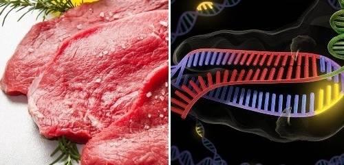 Revelan cómo fue la evolución del gen responsable de que la carne roja produ..