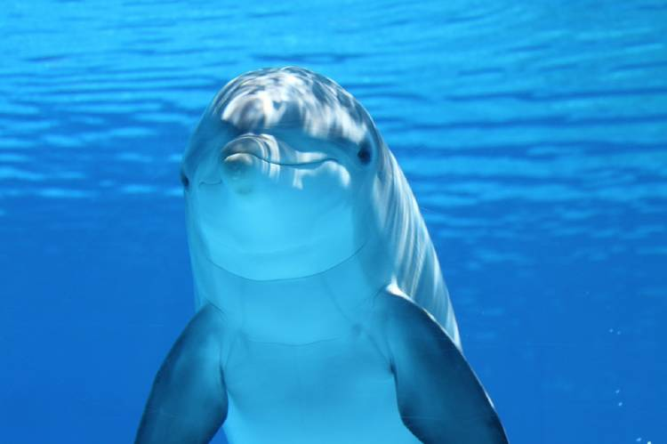 Las criaturas marinas se ven más afectadas por el cambio climático