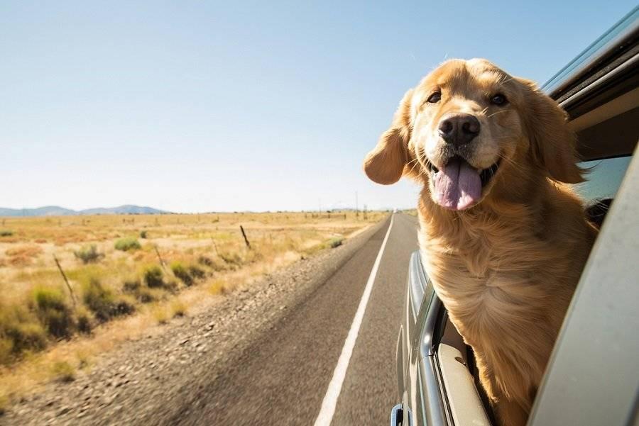 Este heróico perro dirige una ambulancia hacia donde se desmayó su dueño y le salva la vida