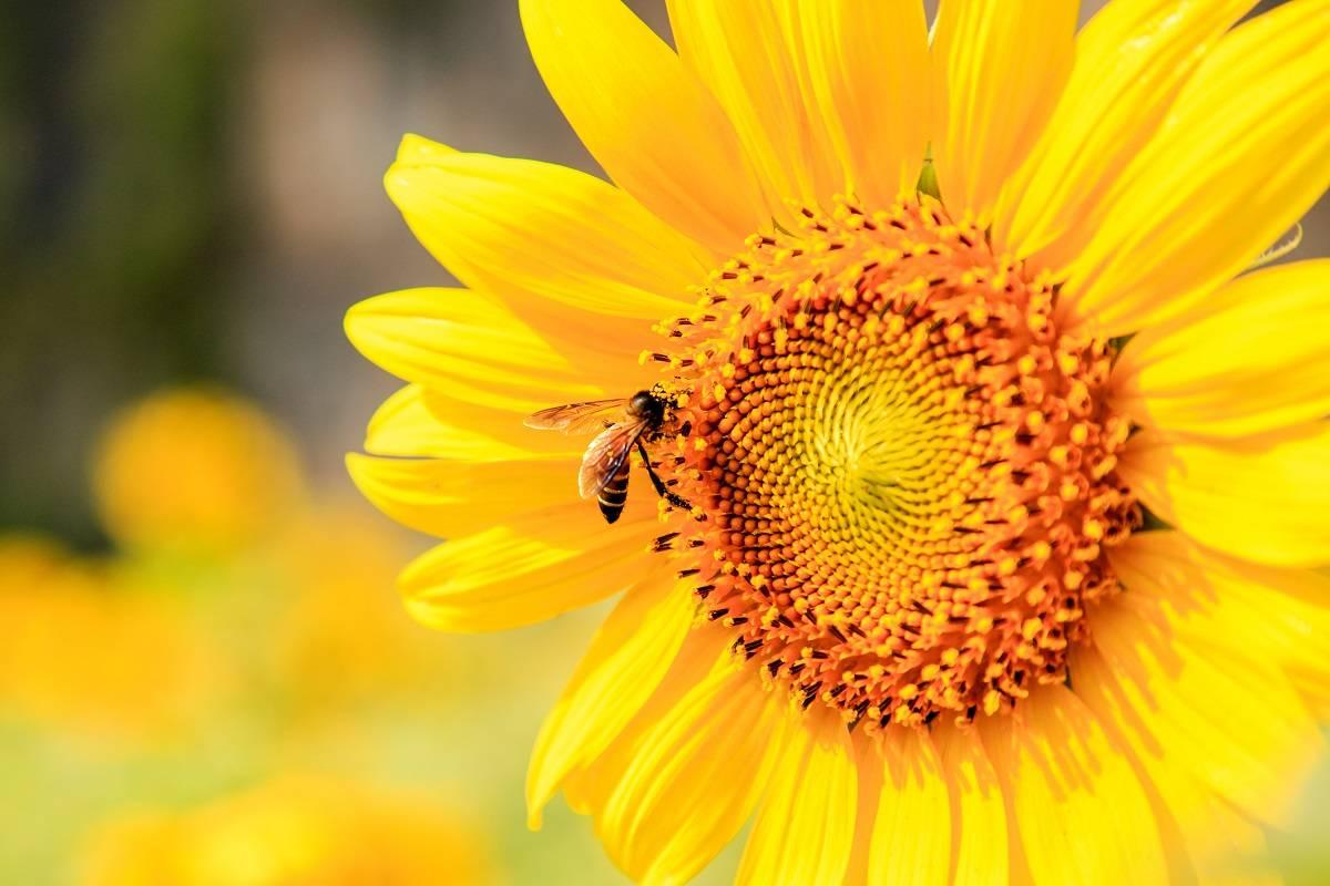 Las abejas son el ser vivo más importante del planeta y están desapareciendo