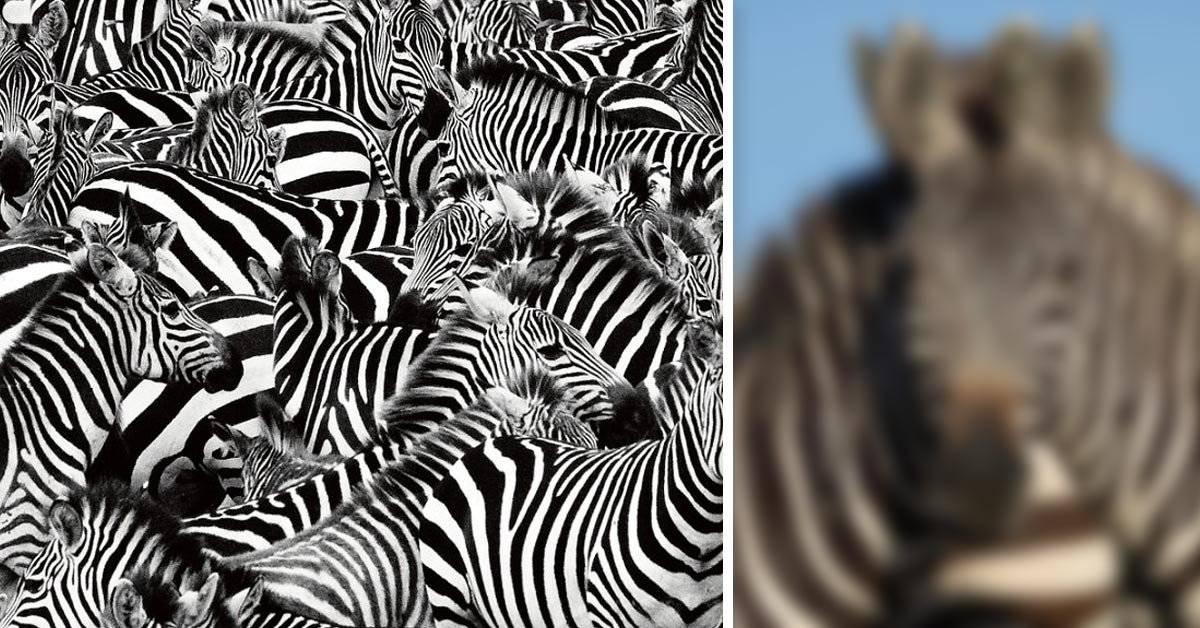 ¿Puedes ver una o dos? La alucinante ilusión óptica de una reserva en África