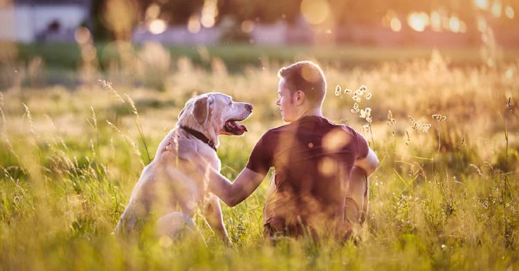 8-mejores-peliculas-perros