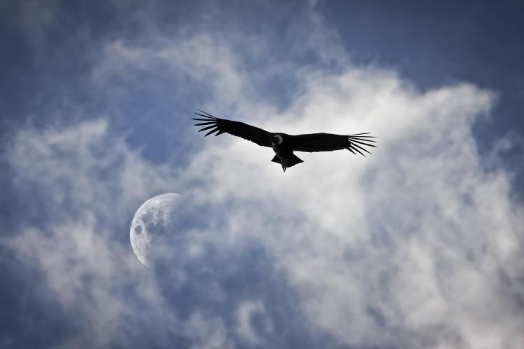 Condor y Luna- Hernan Canuti