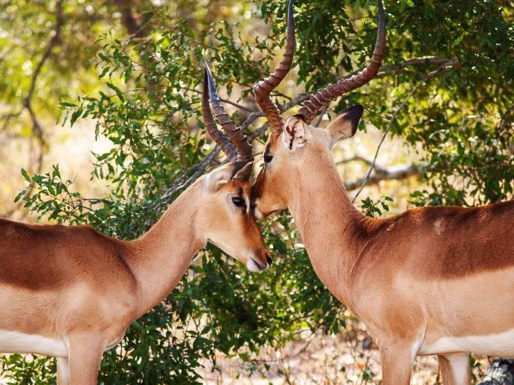 gazelles-704320