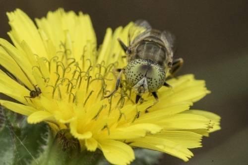 Identifican 16 nuevas especies de insectos sin registrar: cómo son y qué deb..
