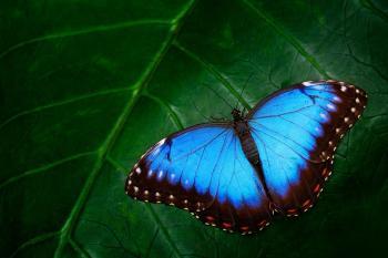 tipos de mariposas y su significado