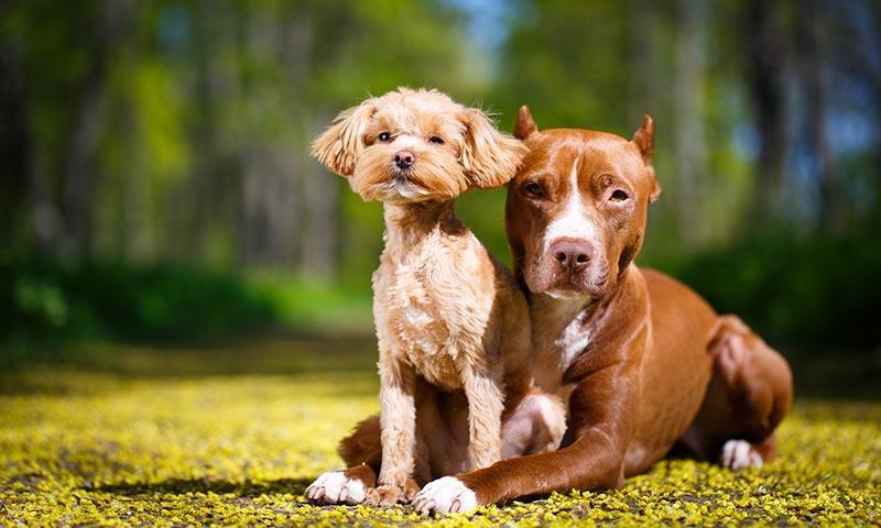 España eliminará la lista de razas de perros peligrosas