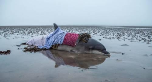 Una mujer salva a un delfín varado después de que el GPS la enviara por una ..