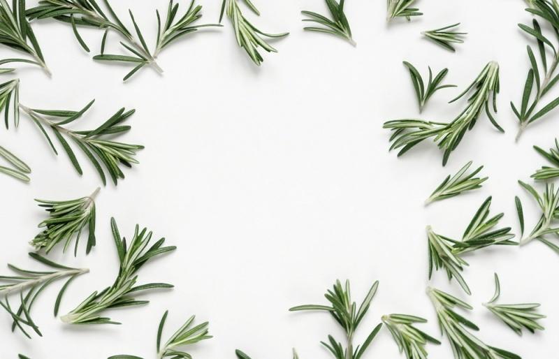 para que nos sirve la planta medicinal romero