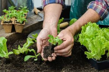 hombre planta jardin huerto casero practica agricultura urbana