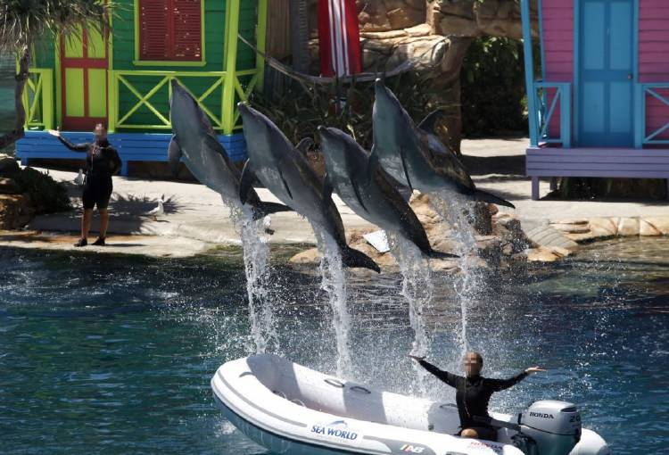 dolphins_in_captivity_at_sea_world_australia
