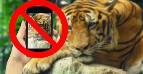 Tinder le pide a sus usuarios que no se fotografíen con tigres