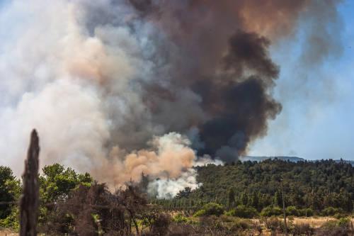 Incendios forestales en Chile consumen 5.000 hectáreas