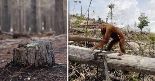 Los bosques de la tierra pierden el equivalente a 40 campos de fútbol por minuto