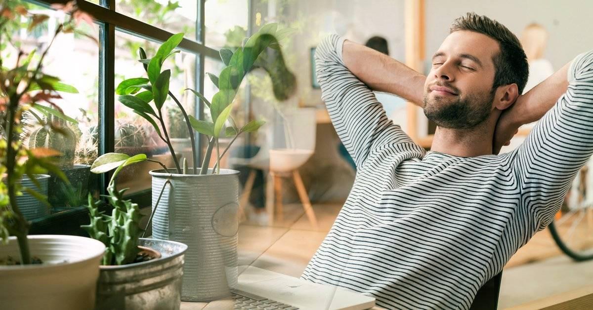 9 ideas para disfrutar de la naturaleza aún si estás adentro todo el día