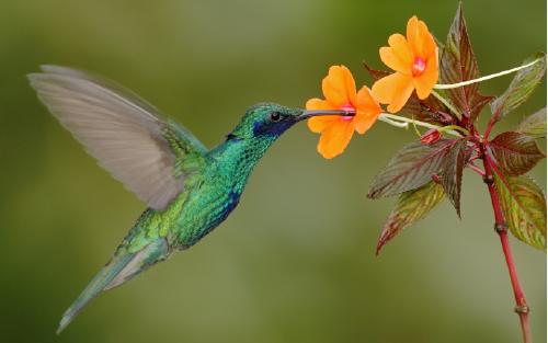 Descubre el gran secreto de los colibríes para conservar su energía