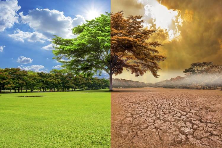 Un árbol creciendo en un campo y en un desierto ilustra el cambio climático